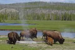 В Йеллоустоуне открылся первый Национальный парк США