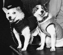 Советский космический корабль «Восток» с собаками Белкой и Стрелкой на борту совершил суточный полет с возвращением на Землю