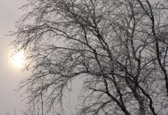 Праздник зимнего солнцестояния Дунчжицзе
