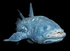 Близ южной части Африки была выловлена латимерия - самая древняя рыба на Земле