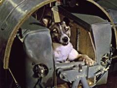 В СССР совершен запуск космического аппарата «Спутник-2» с собакой Лайкой на борту