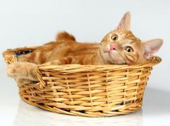 День кошки в Японии